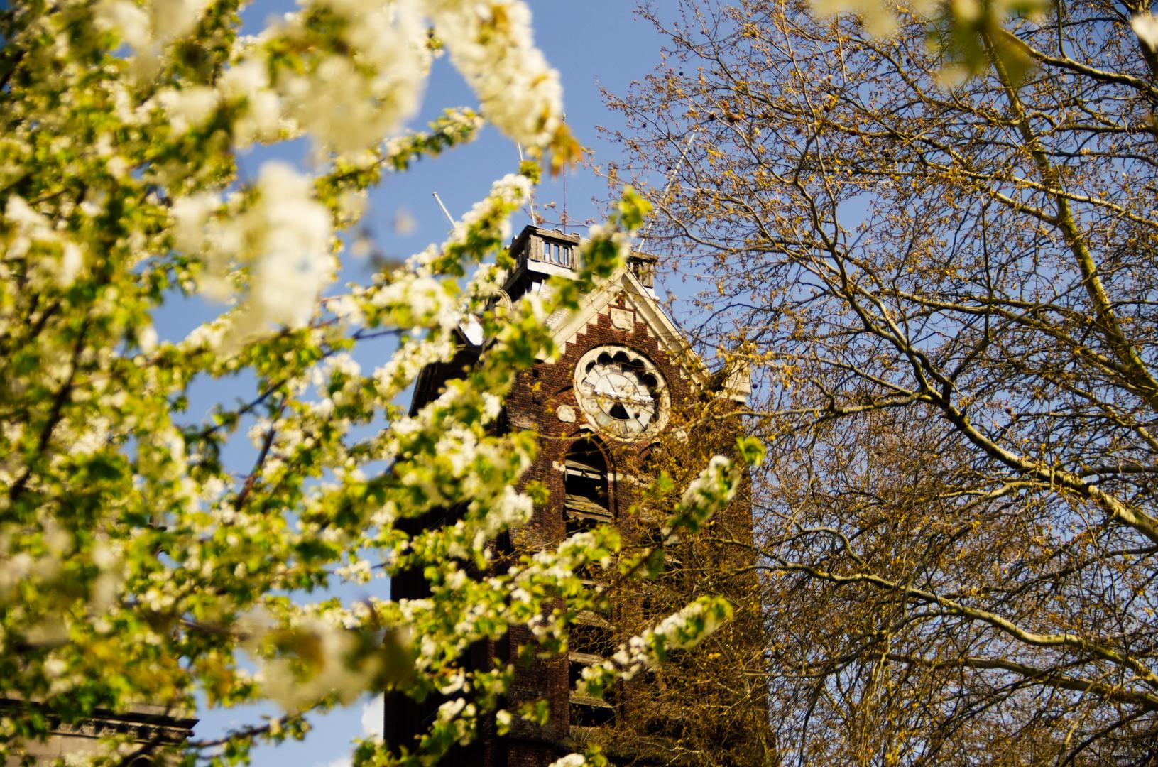 campanile cathédrale notre dame de la treille lille 2498