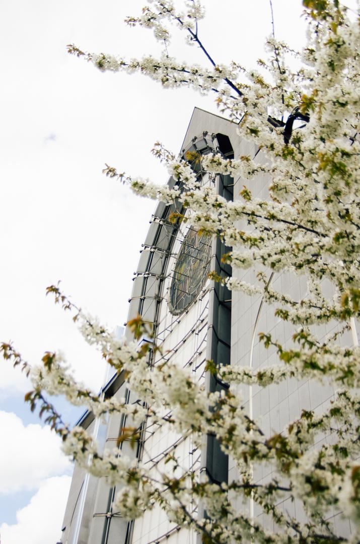 façade printemps cathédrale notre dame de la treille lille 2493