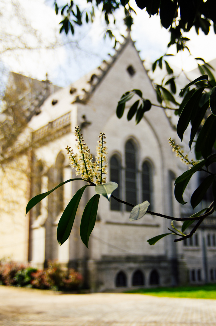 façade printemps chapelle capitulaire cathédrale notre dame de la treille lille 2502